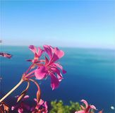 Bunter Blumenstrauß der Blumen lizenzfreie stockfotos
