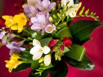 Bunter Blumenstrauß von Freesien Stockfotos