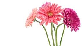 Bunter Blumenstrauß von Gerberas Stockfoto