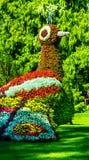 Bunter exotischer Vogel Stockfoto