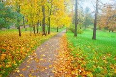 Bunter Fall des Hintergrundes verlässt im geriebenen Herbst und im Fußweg im Park Stockfotos