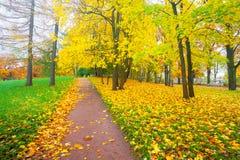 Bunter Fall des Hintergrundes verlässt im geriebenen Herbst und im Fußweg im Park Lizenzfreie Stockfotografie