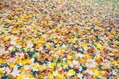 Bunter Fall des Hintergrundes verlässt im Herbst, der im Park gerieben wird Stockbild