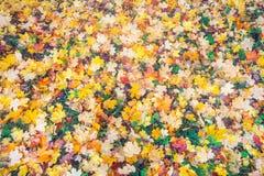 Bunter Fall des Hintergrundes verlässt im Herbst, der im Park gerieben wird Stockfotos
