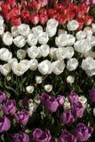 Bunter Garten stockbilder