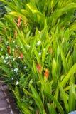 Bunter Garten Lizenzfreie Stockfotos
