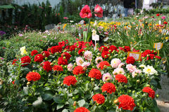 Bunter Garten-Center Stockfoto