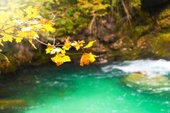 Bunter gelber Herbstlaub, der Saisonfarben an einem sonnigen Tag ändert lizenzfreie stockbilder