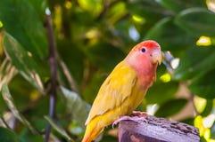 Bunter gelber Papagei auf Stumpf im Dschungel stockfotos