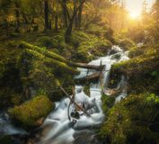 Bunter grüner Wald mit Wasserfall in Gebirgsfluss bei Sonnenuntergang lizenzfreie stockfotos