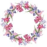Bunter handgemachter runder Rahmen des Aquarells mit rosa Tulpe und Iris blüht Stockfotografie