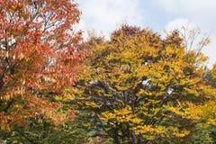 Bunter Herbst Stockfoto