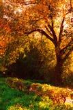 Bunter Herbst Lizenzfreies Stockfoto