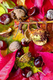 Bunter Herbst Stockfotos