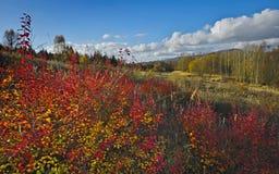 Bunter Herbst Lizenzfreie Stockbilder
