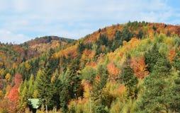 Bunter Herbst in den Bergen von Slowakei stockfotos
