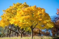Bunter Herbst im Park, Toronto, Kanada Stockfoto