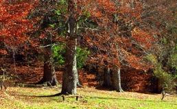 Bunter Herbst im Wald Lizenzfreies Stockfoto
