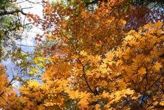 bunter Herbst im Wald Lizenzfreie Stockbilder