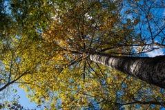 Bunter Herbst im Wald Stockbild