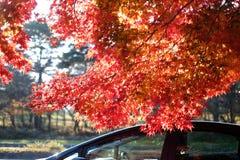 Bunter Herbst in Japan stockbild