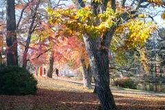 Bunter Herbst in Japan lizenzfreie stockfotos