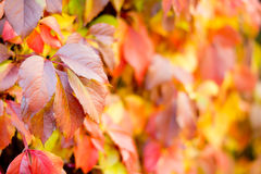 Bunter Herbst- oder Fallhintergrund Stockbilder