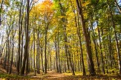 Bunter Herbst-Wald Stockbilder