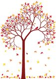 Bunter Herbstbaum Stockbild