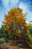 Bunter Herbstbaum Stockfoto