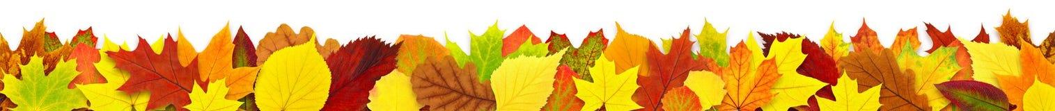 Bunter Herbstblattrand Stockbild