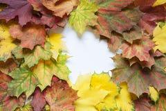 Bunter Herbsthintergrund von Ahornblättern Lizenzfreie Stockfotos