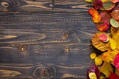Bunter Herbstlaub, über einem hölzernen Hintergrund Stockfotos