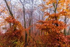Bunter Herbstlaub auf Baum und Nebel Lizenzfreie Stockfotografie