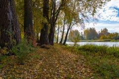 Bunter Herbstlaub auf einer Gestrüpp von Bäumen stockfotos