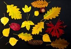 Bunter Herbstlaub auf schwarzem Hintergrund lizenzfreies stockbild