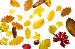 Bunter Herbstlaub auf weißem Hintergrund lizenzfreie stockfotografie