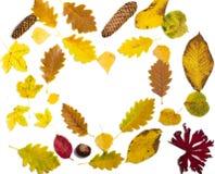 Bunter Herbstlaub auf weißem Hintergrund stockbild
