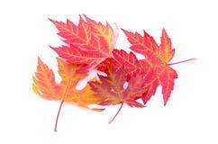 Bunter Herbstlaub lokalisiert auf Weiß lizenzfreies stockbild