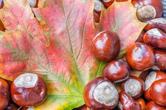 Bunter Herbstlaub mit Kastanien stockbild