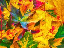 Bunter Herbstlaubnaturhintergrund Lizenzfreie Stockbilder
