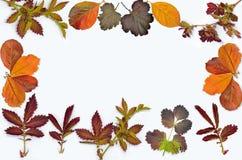 Bunter Herbstlaubrahmen auf weißem Hintergrund stockfotos