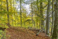 Bunter Herbstwald Lizenzfreies Stockfoto