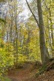 Bunter Herbstwald Lizenzfreies Stockbild