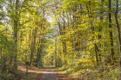Bunter Herbstwald Stockfoto
