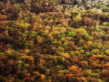Bunter Herbstwald stockfotografie