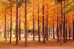 Bunter Herbstwald mit Bäumen Lizenzfreies Stockfoto