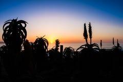 Bunter Himmel auf dem Meer mit Blumen in der Front Lizenzfreie Stockfotos