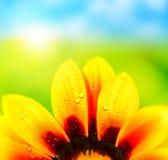 Bunter Hintergrund der abstrakten Blumenblumenblätter Stockbild