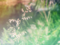 Bunter Hintergrund der abstrakten undeutlichen Gras-Blume Lizenzfreie Stockfotos